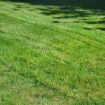 When Should I Fertilize My Lawn?